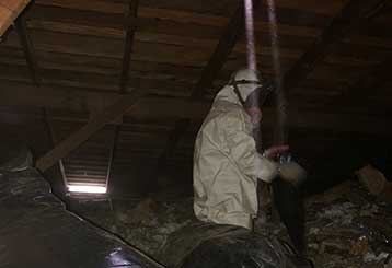 Rodent Control Project | Attic Cleaning Glendale, CA